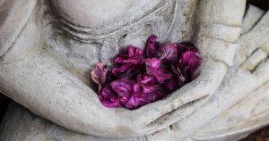 gopika-yoga-in-schwäbisch-hall - das Bild zeigt lila blütenblätter die sich im Schoß einer Buddha Statue gesammelt haben