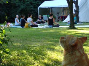 gopika-yoga-in-schwäbisch-hall - das Bild zeigt ein Gruppe von Yogaübenden im Freien mit einer Katze im Vordergrund