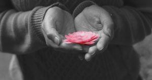 gopika-yoga-in-schwäbisch-hall - das Bild zeigt zwei Hände die eine rosa Blüte halten