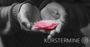 gopika-yoga-in-schwäbisch-hall - das Bild zeigt zwei Hände die eine rosa Blüte halten.