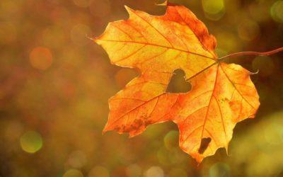 Herbst im Sinn