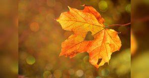 Gopika-Yoga-in-Schwaebisch Hall-Herbst-im-Sinn-FB